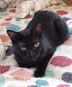 黒猫のチーちゃん