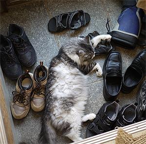 とうとう玄関に寝そべる