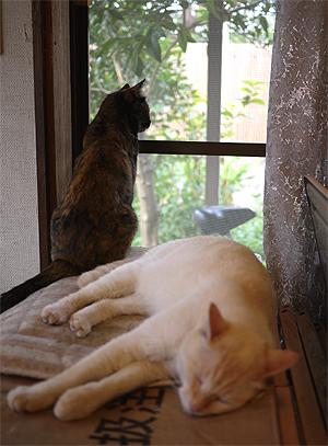外を見てるちゃーちゃんと、朝寝してるキューちゃん