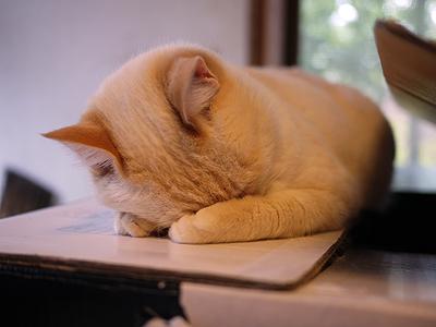 顔かくして寝てる