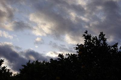 夏ミカンと萩の空